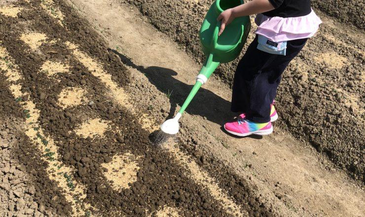 篠栗町の畑で農業体験
